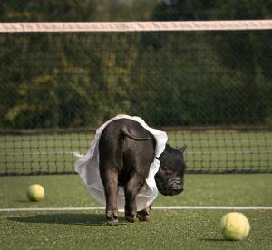 maialino tennis