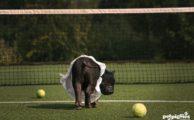 Torneo del maialino 2019